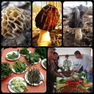 Jornada  de setas de primavera y verduras silvestres